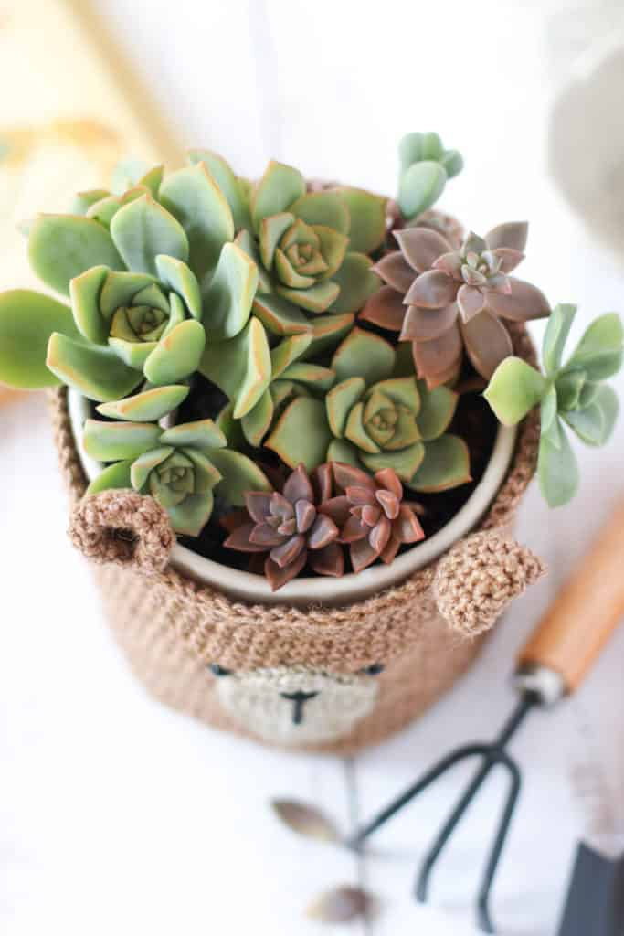 crochet teddy bear basket filled with succulents